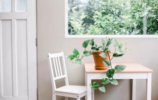 نگهداری و پرورش گیاه پتوس