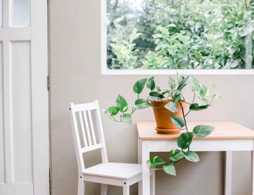پوتوس – راهنمای کامل برای نگهداری و پروش پوتوس در خانه