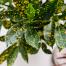 نگهداری و پرورش گیاه کروتون یا کرچک هندی