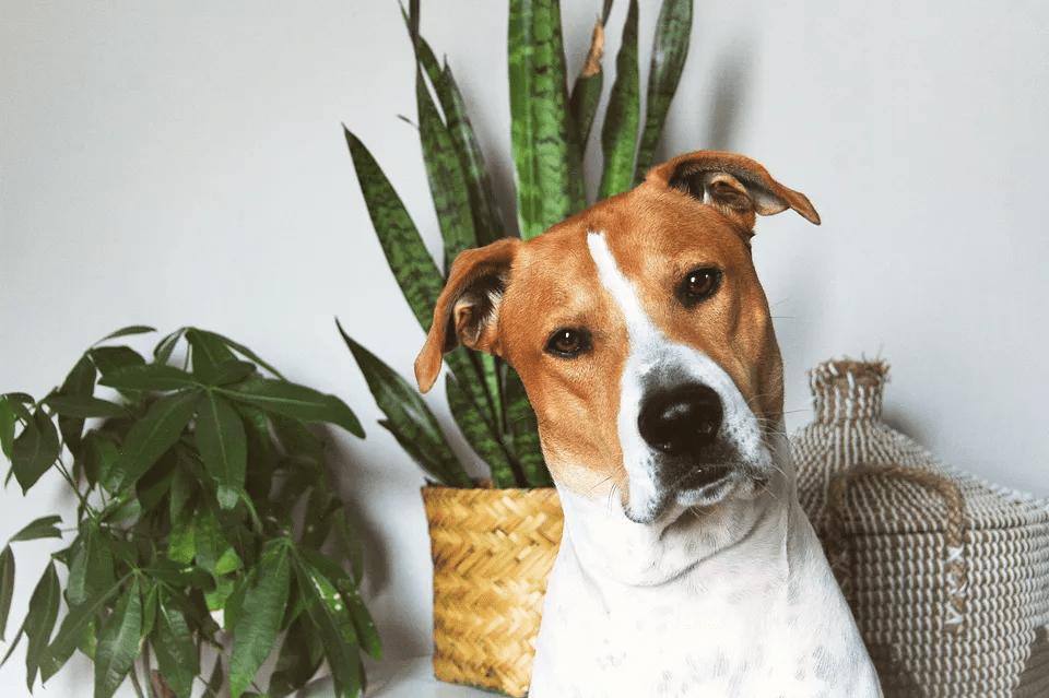 گیاهان خانگی که برای حیوانات خانگی سمی هستند