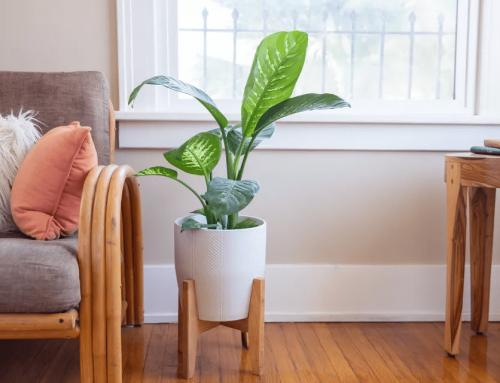 گیاه دیفن باخیا – راهنمای نگهداری و پرورش